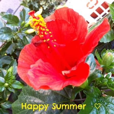 夏だから、きちんとスタミナつけて、健康美をキープしましょう!  #summer#hibiscus#hawaii#flower