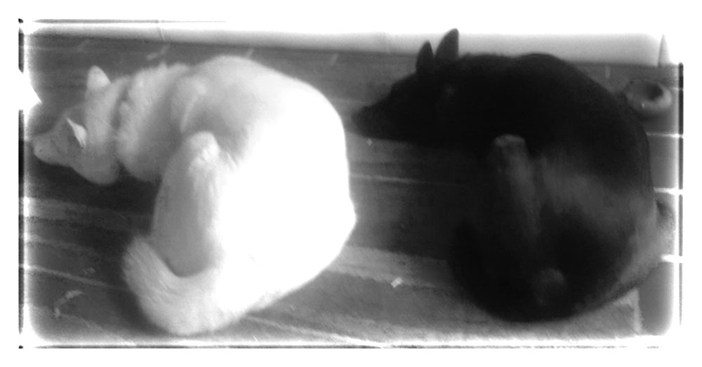 Copy of Otis and Milo