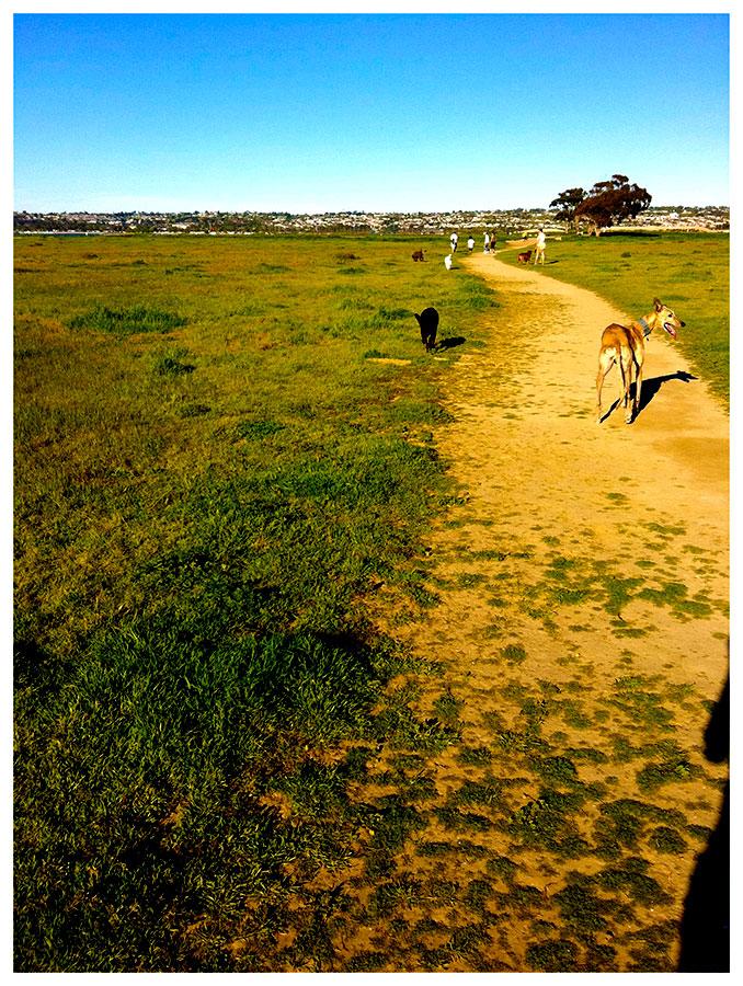 Dog Field Trip
