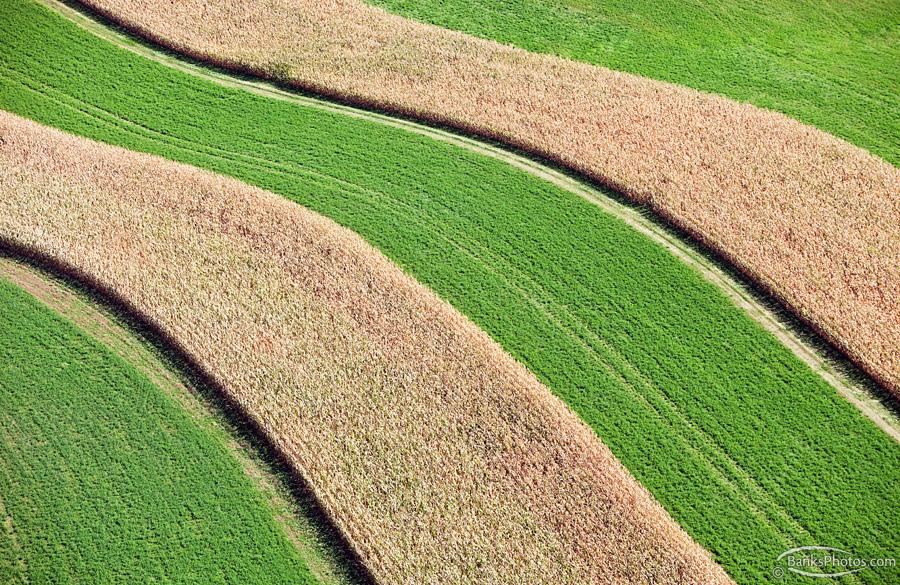 IMG_4662_SS-Corn-Hay-Strip-Crop-Aerial_Lg.jpg