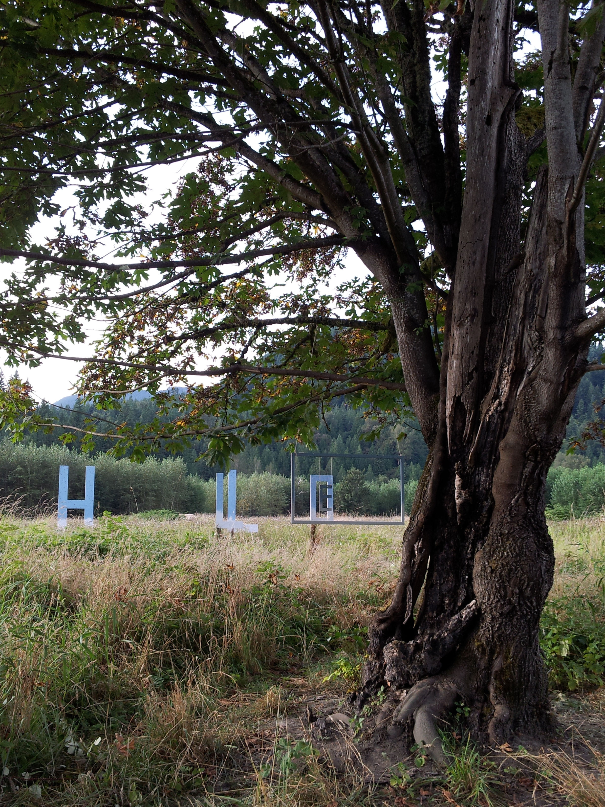 hello field tree2.jpg