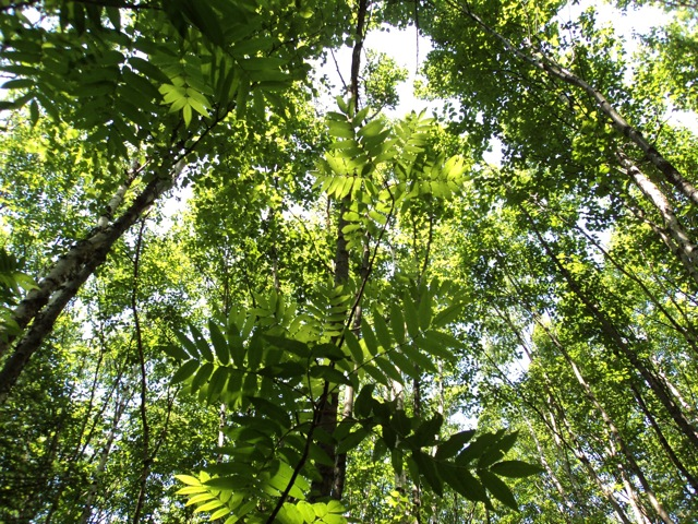 ForestWalk.jpg