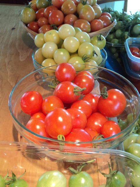 tomato harvest 1.jpg