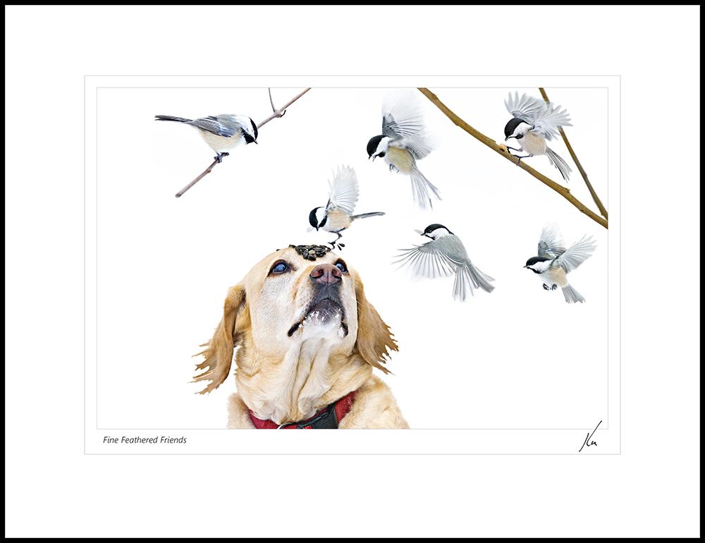 Kas Stone - Fine Feathered Friends (KAS09733).jpg