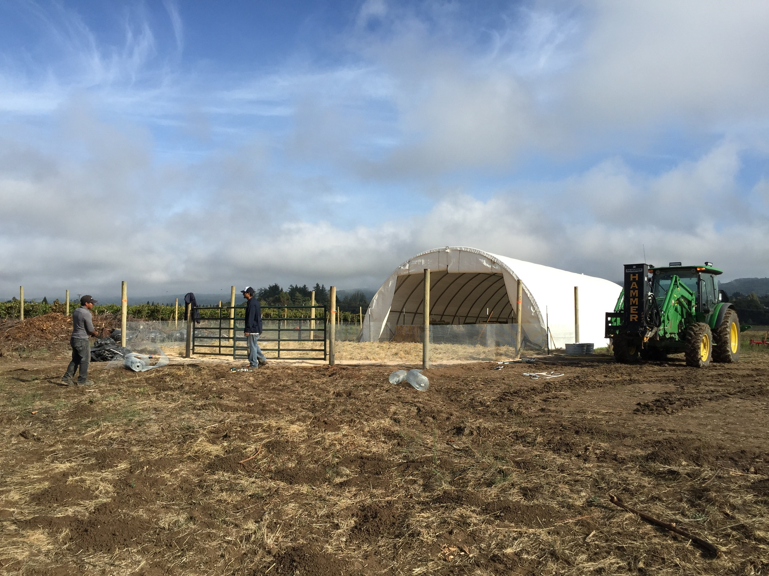 Building the temporary home for our sheep / pigs and new dogs.