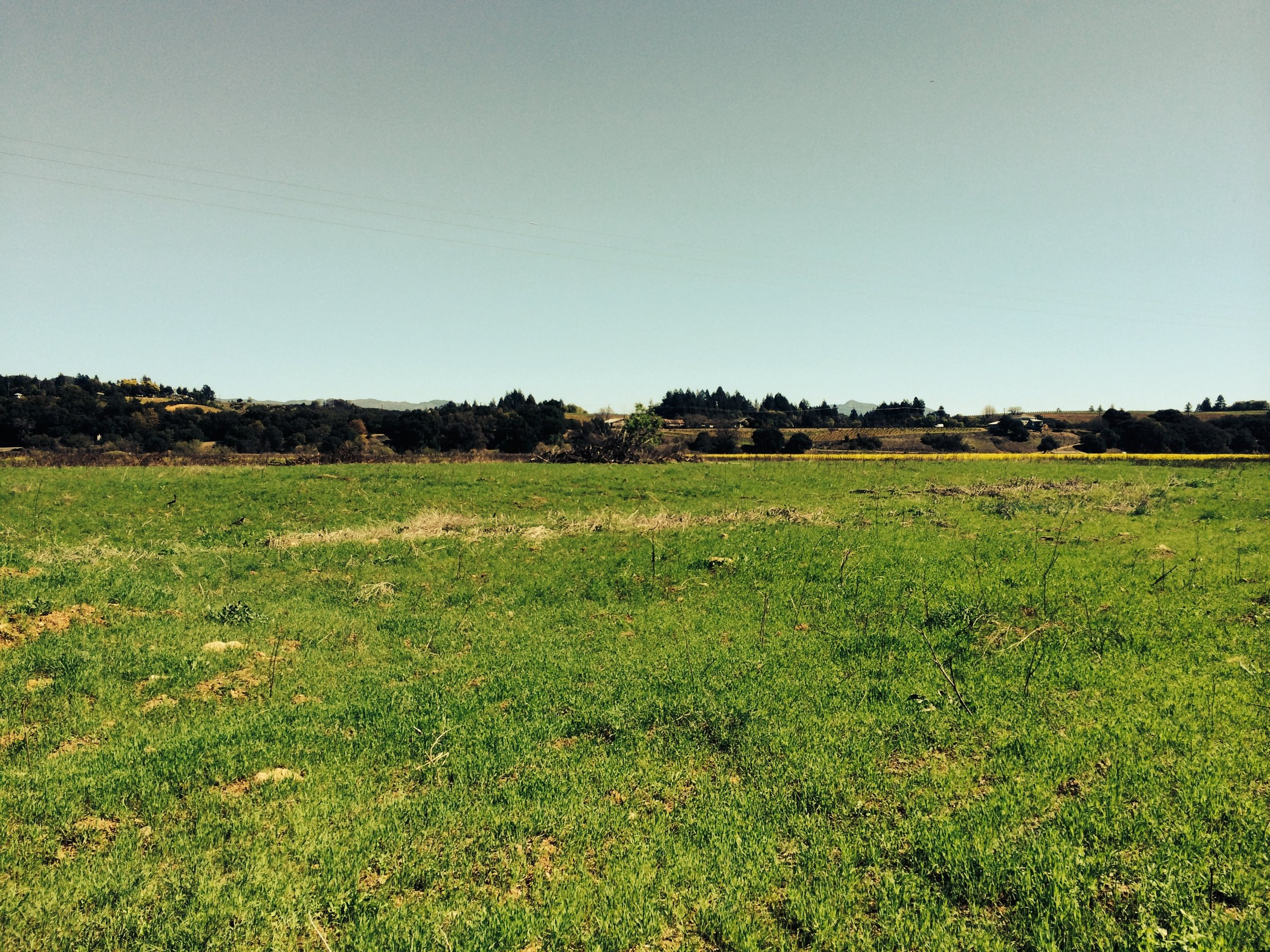 A blank field we will someday turn into Noci. What we didn't see was all the metal buried underground.