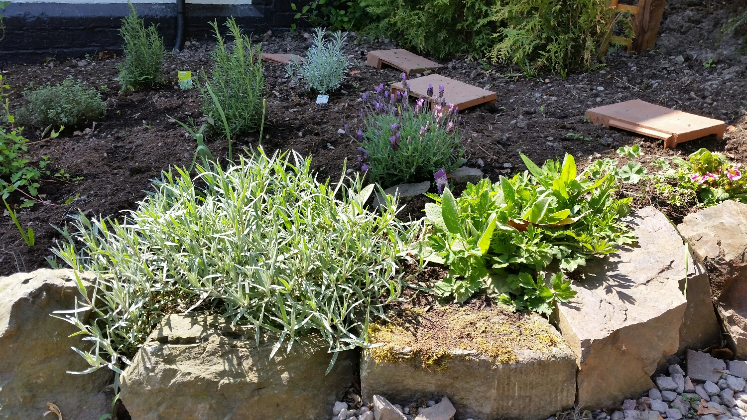 Our rockery