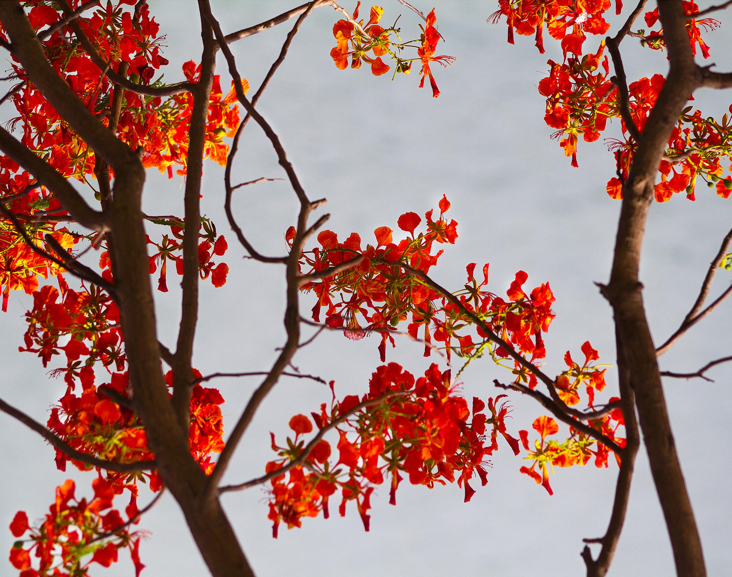 red leaves_11x14.jpg
