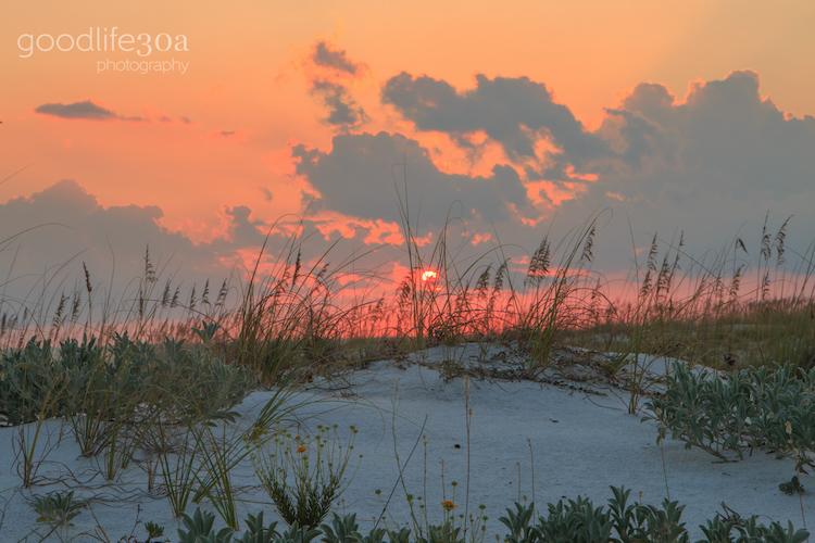 beachscapes - dune flowers at sunset.jpg