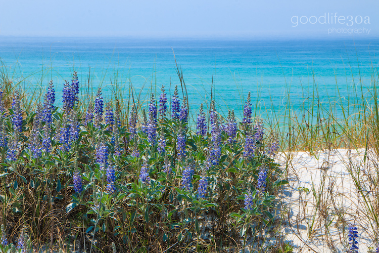beachscapes - purple flowers.jpg