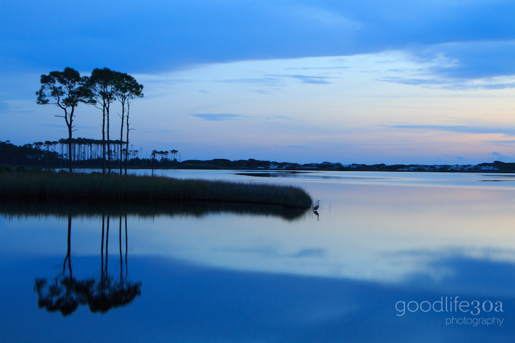 coastal dune lakes - blue western lake heron.jpg