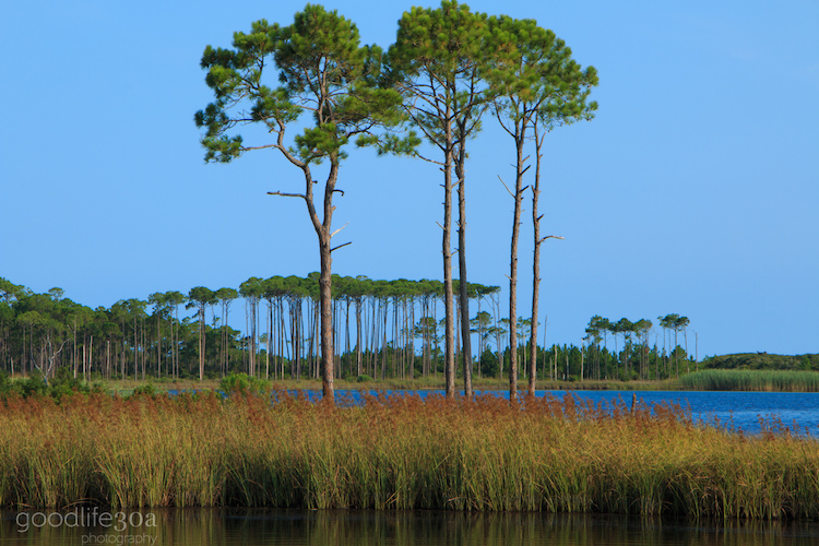 coastal dune lakes - 2 pines daylight western lake.jpg