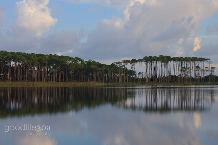 coastal dune lakes - pines all across.jpg