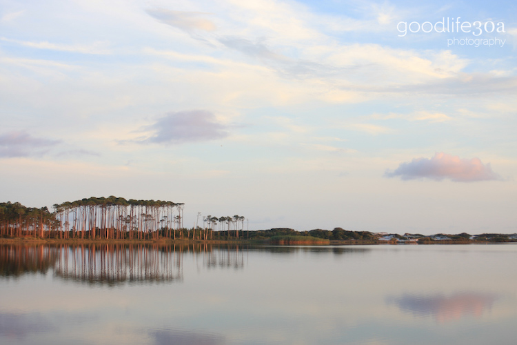coastal dune lakes - western lake wide view pines.jpg