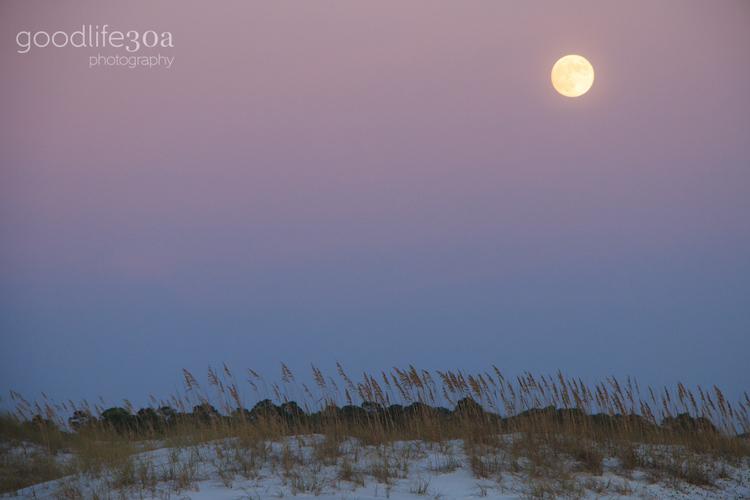 moonrise - purple and blue sky.jpg