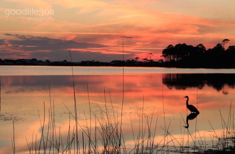 wildlife - heron at orange western lake.jpg