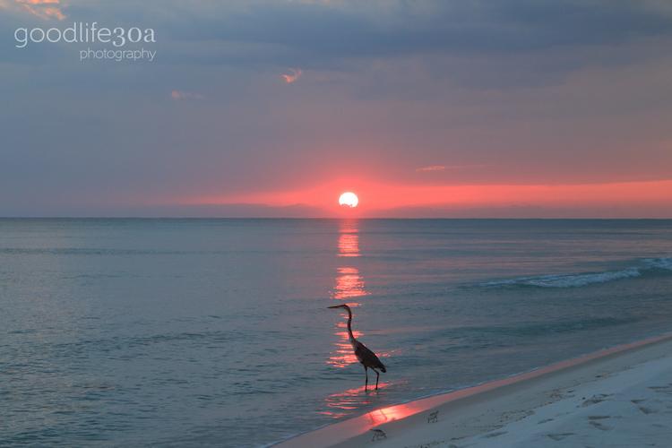 wildlife - heron at gray sunset.jpg