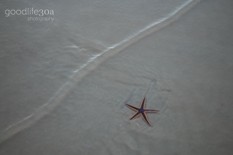 wildlife - starfish.jpg