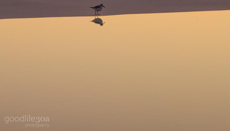 wildlife - tern reflection.jpg