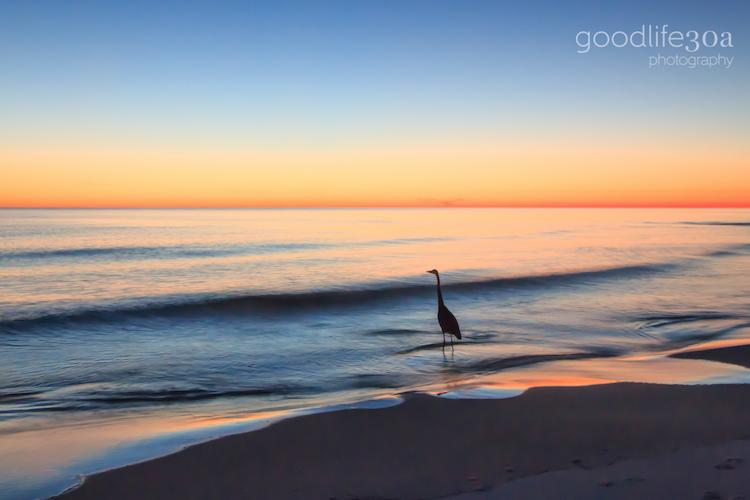 wildlife - twilight heron at shore.jpg