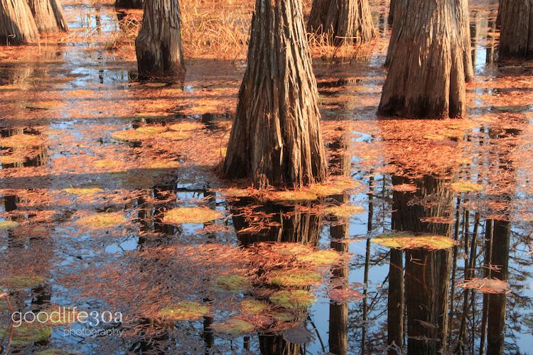 reflections - cypress reflections.jpg