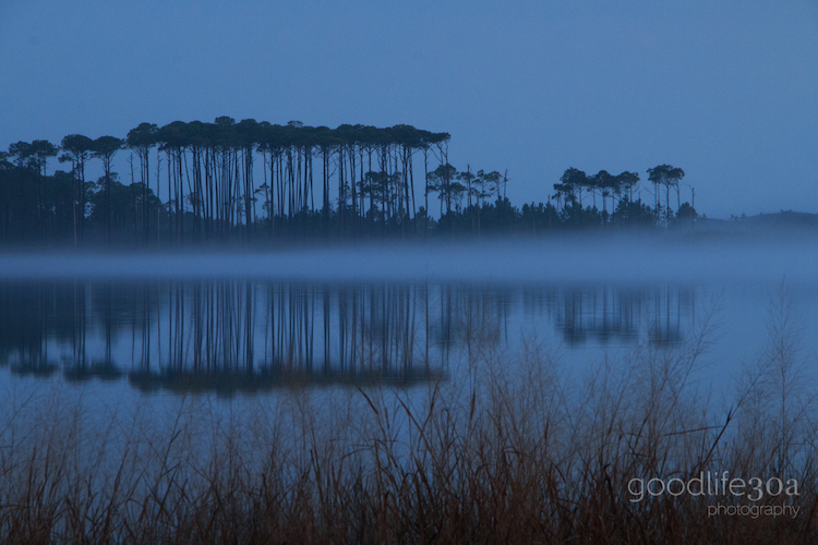 reflections - foggy slash pines western lake.jpg