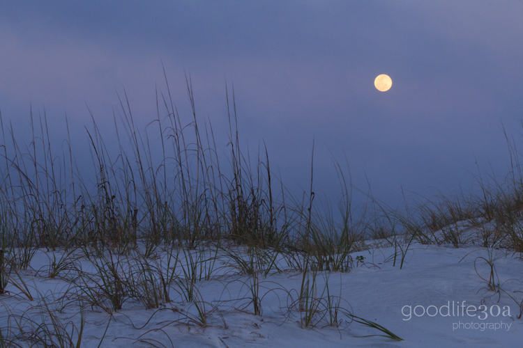 moonrise replacement - moonrise and sea oats.jpg
