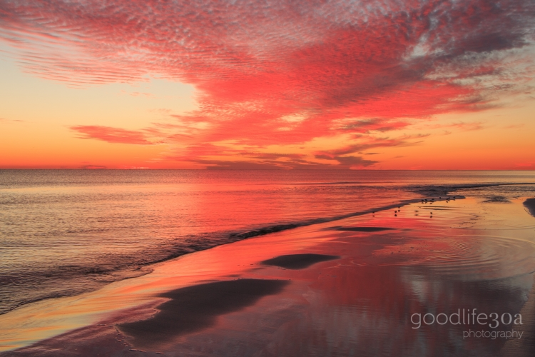 sunsets - pink with pipers at shore.jpg