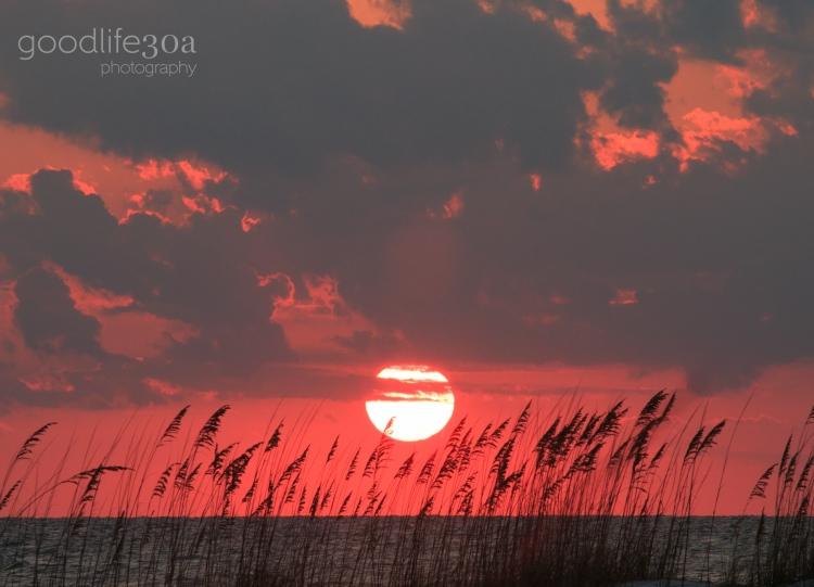 sunsets - sea oat sunset.jpg