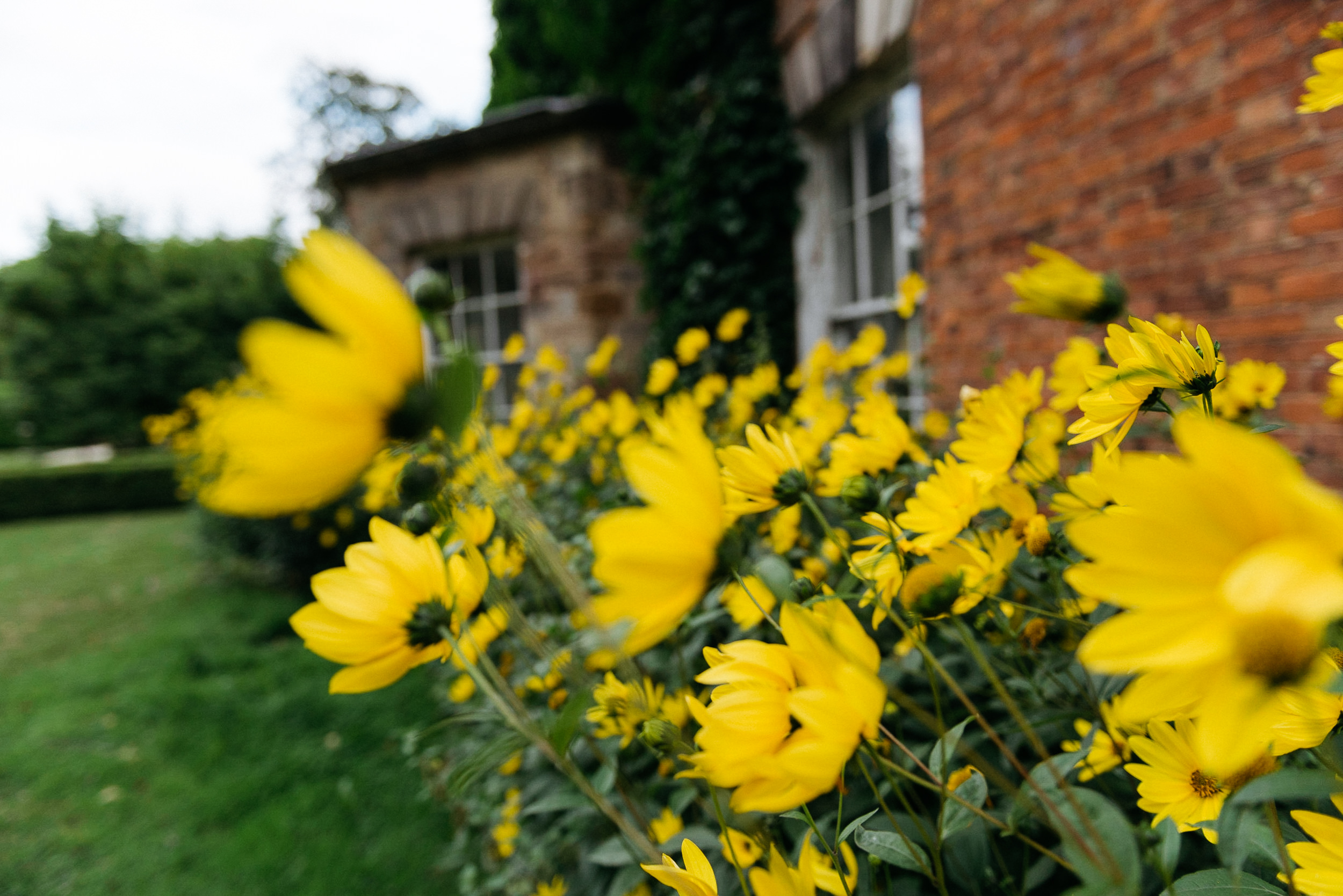 summer flowers in the gardens at Risley Hall
