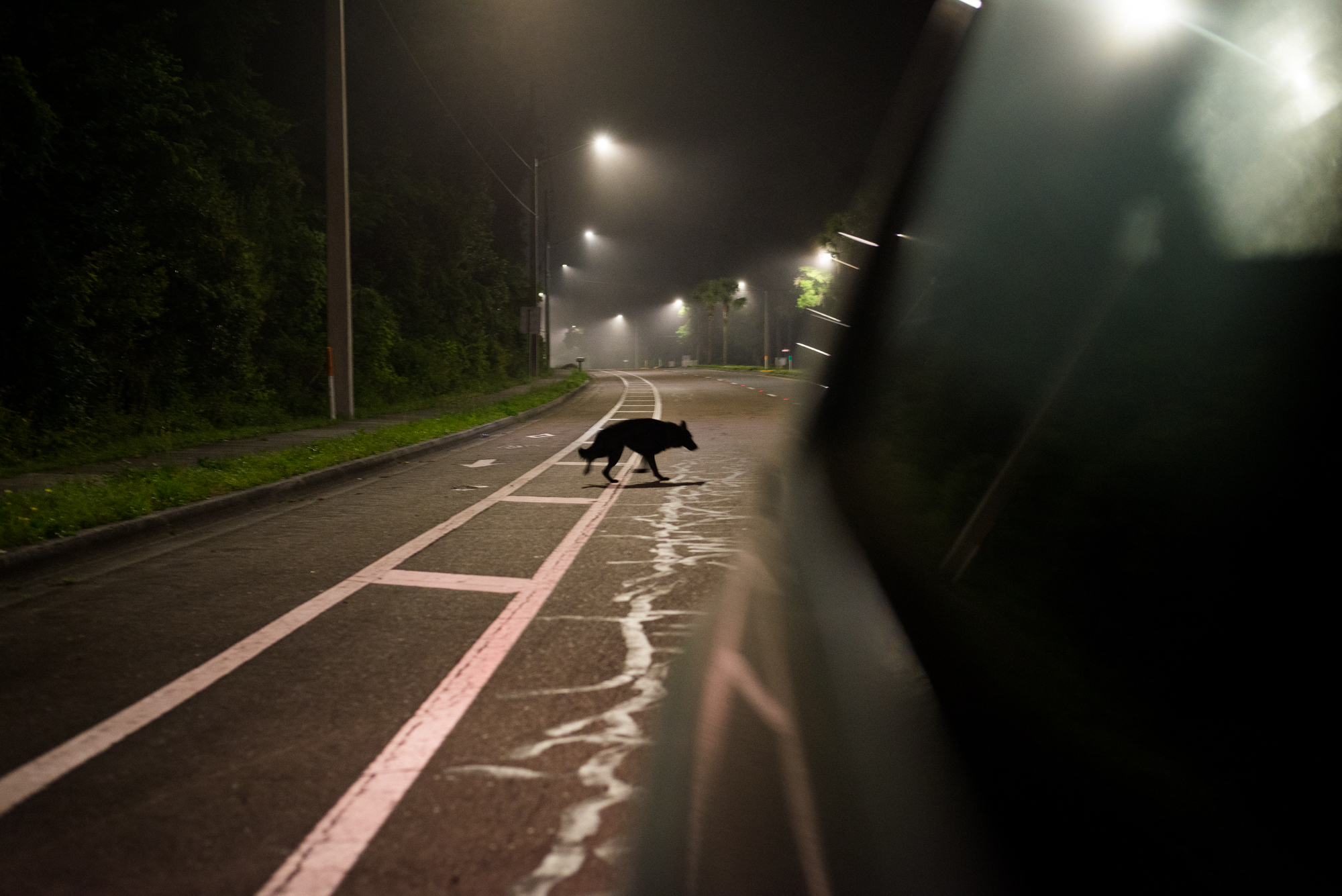 The antithesis of the image above, a dog lurking in the road behind the car poetically symbolizes the passing of an age.