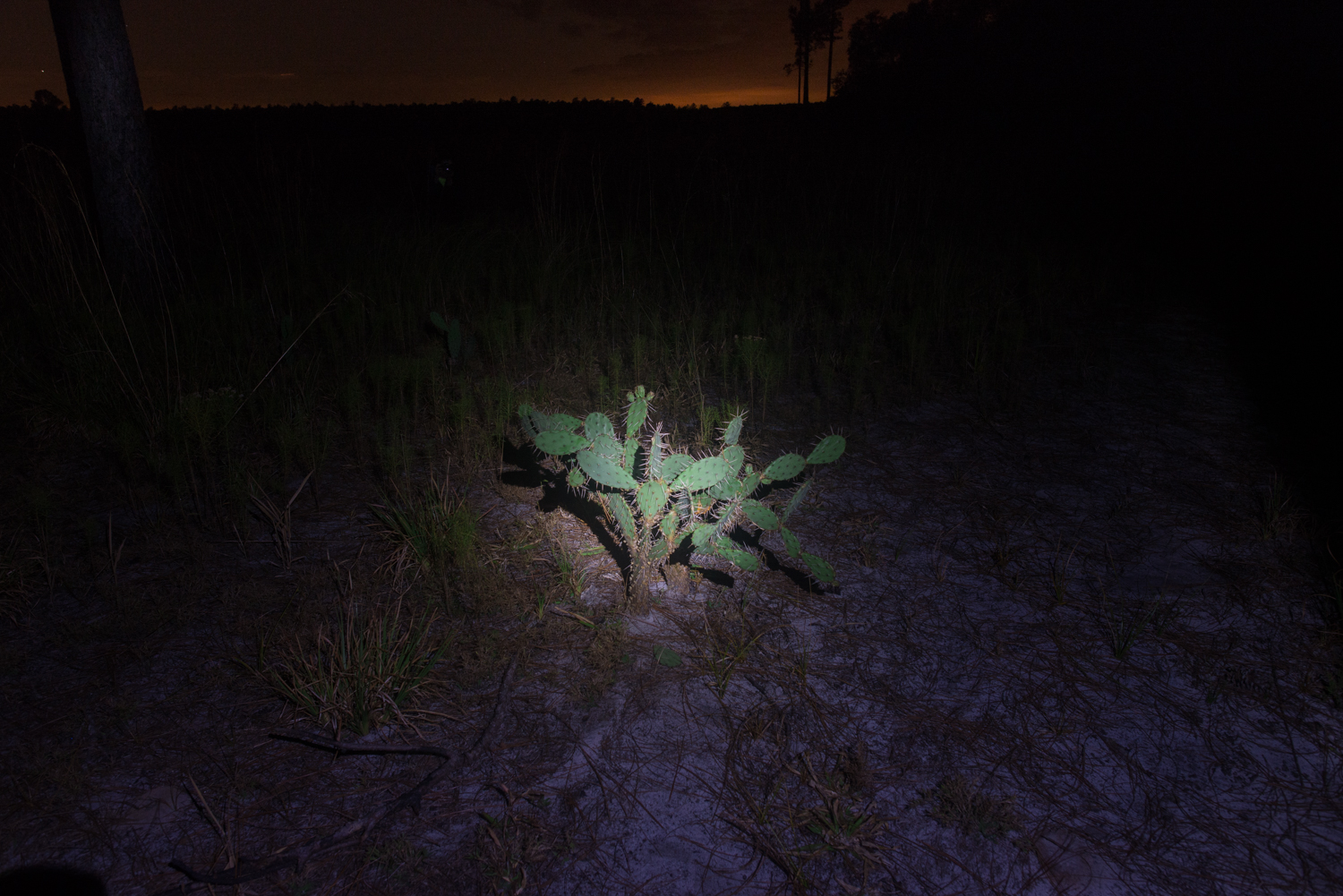 I took this image at Hopkins Prairie in 2016 during our first camping trip together. I remember discussing how difficult it is to take a nice photo of a prickly pear cactus.