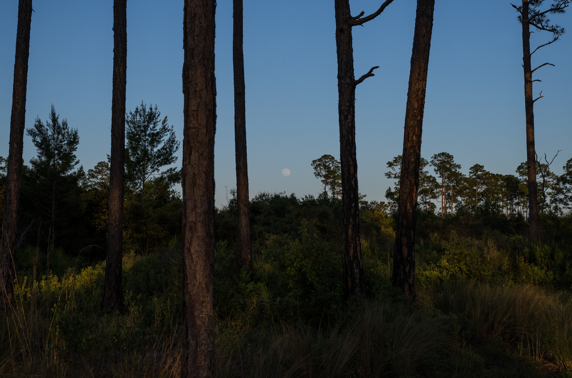 The moon rises over the Juniper Prairie Wilderness during our hike to the pond.