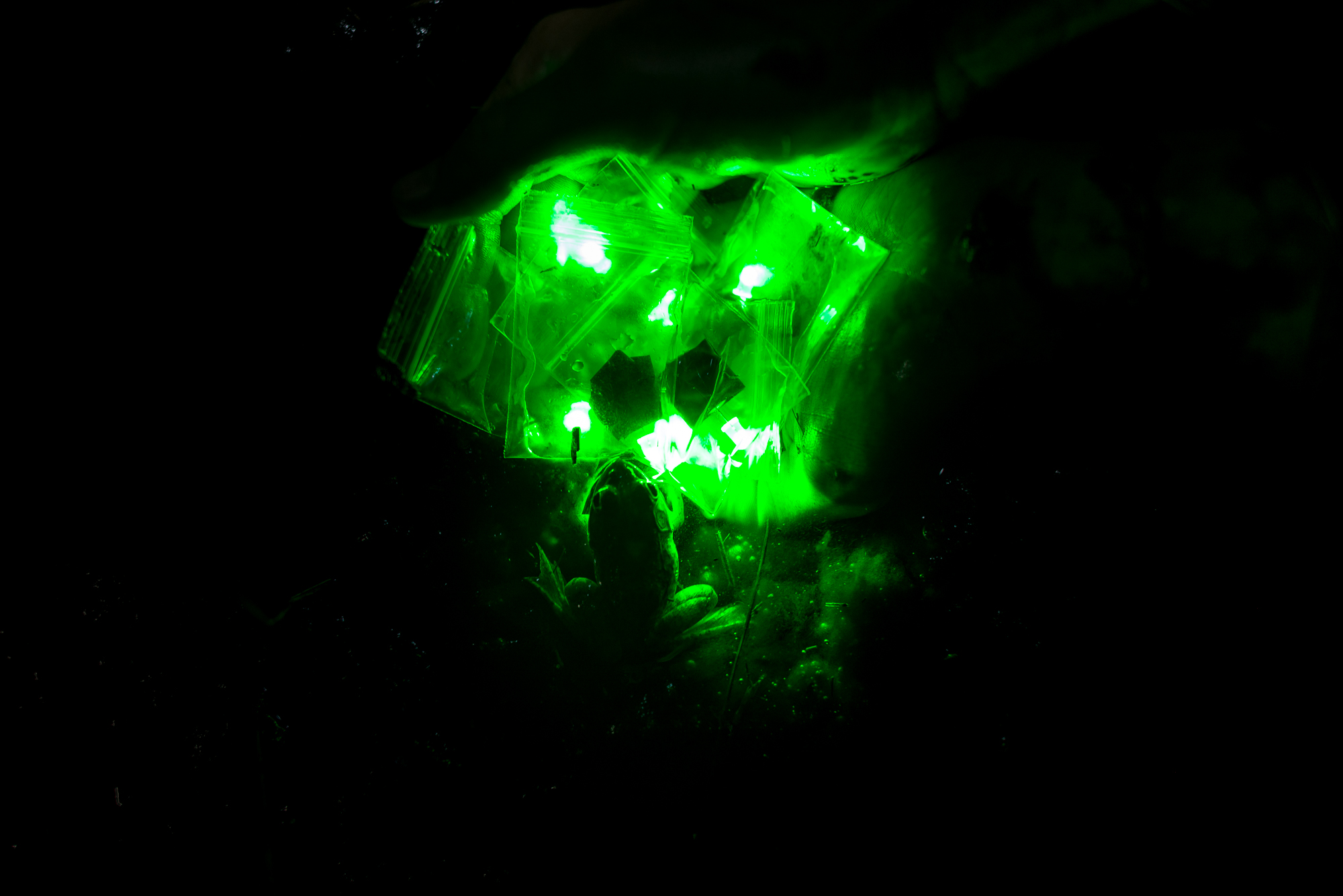A frog glows green in the light of the LEDs.