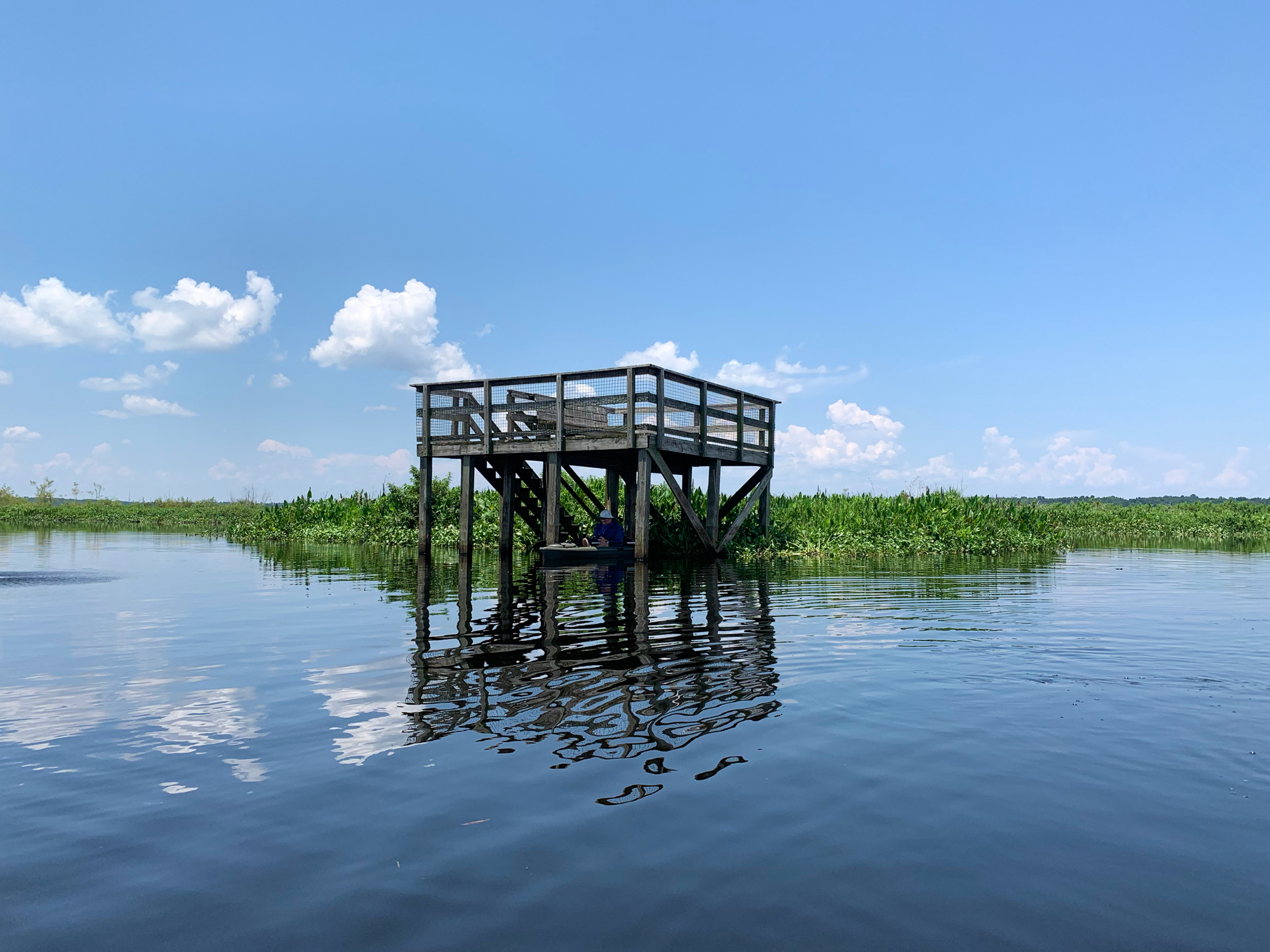 The La Chua Trail observation platform rises from a flooded Paynes Prairie.