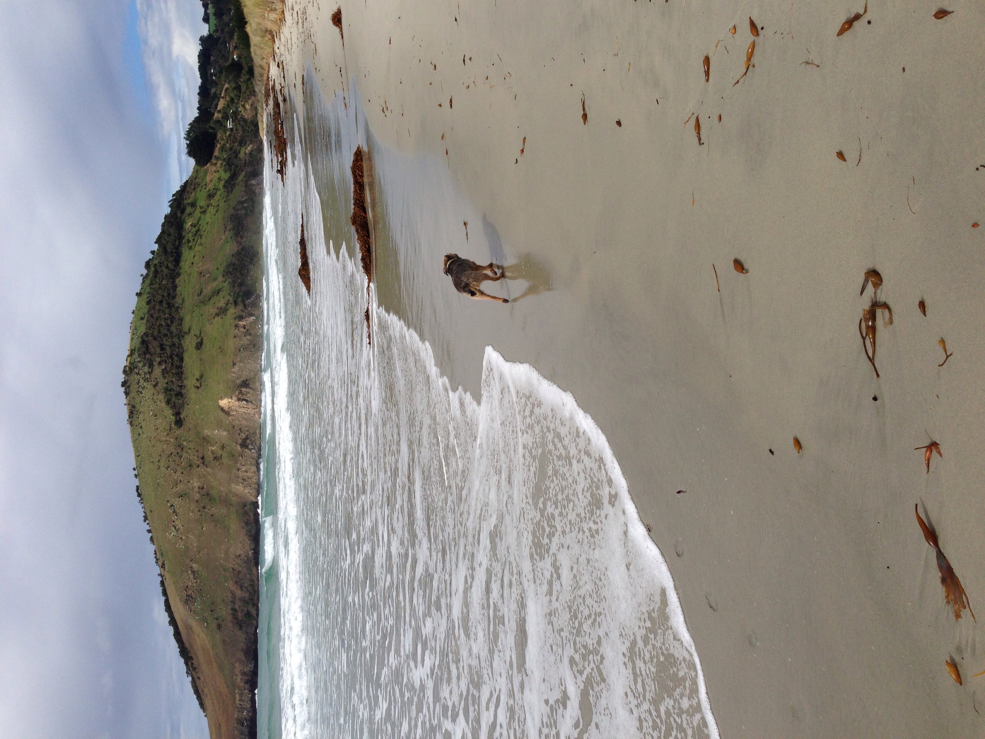 An exhausted Gulliver making his way across Purakaunui beach.