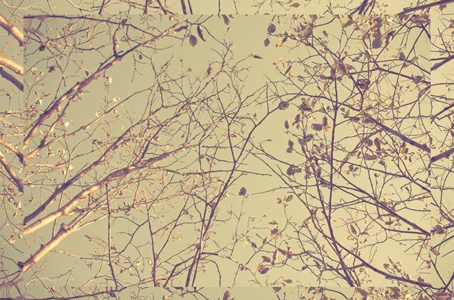 0003_JessicaBowen_BirdOnAWire_Photography_2014_Misc.