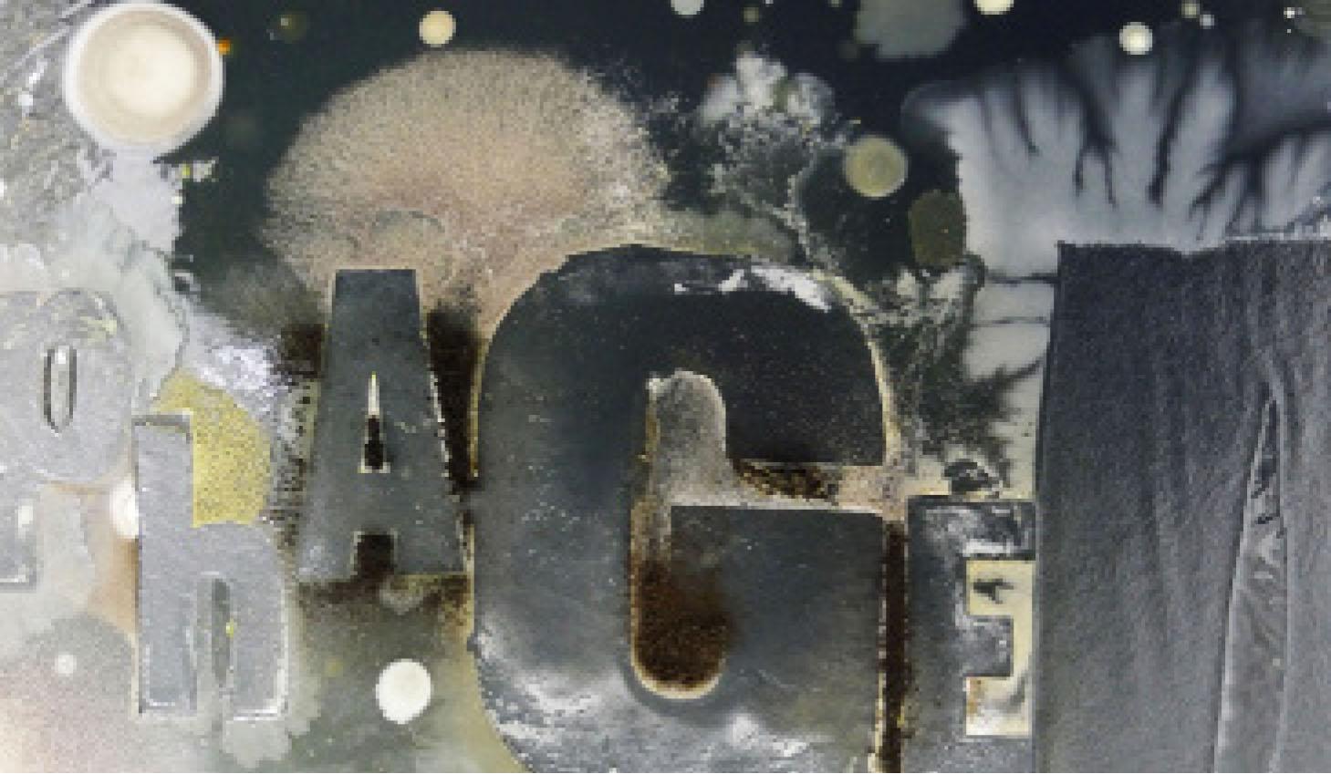 Bacteria Type.jpg