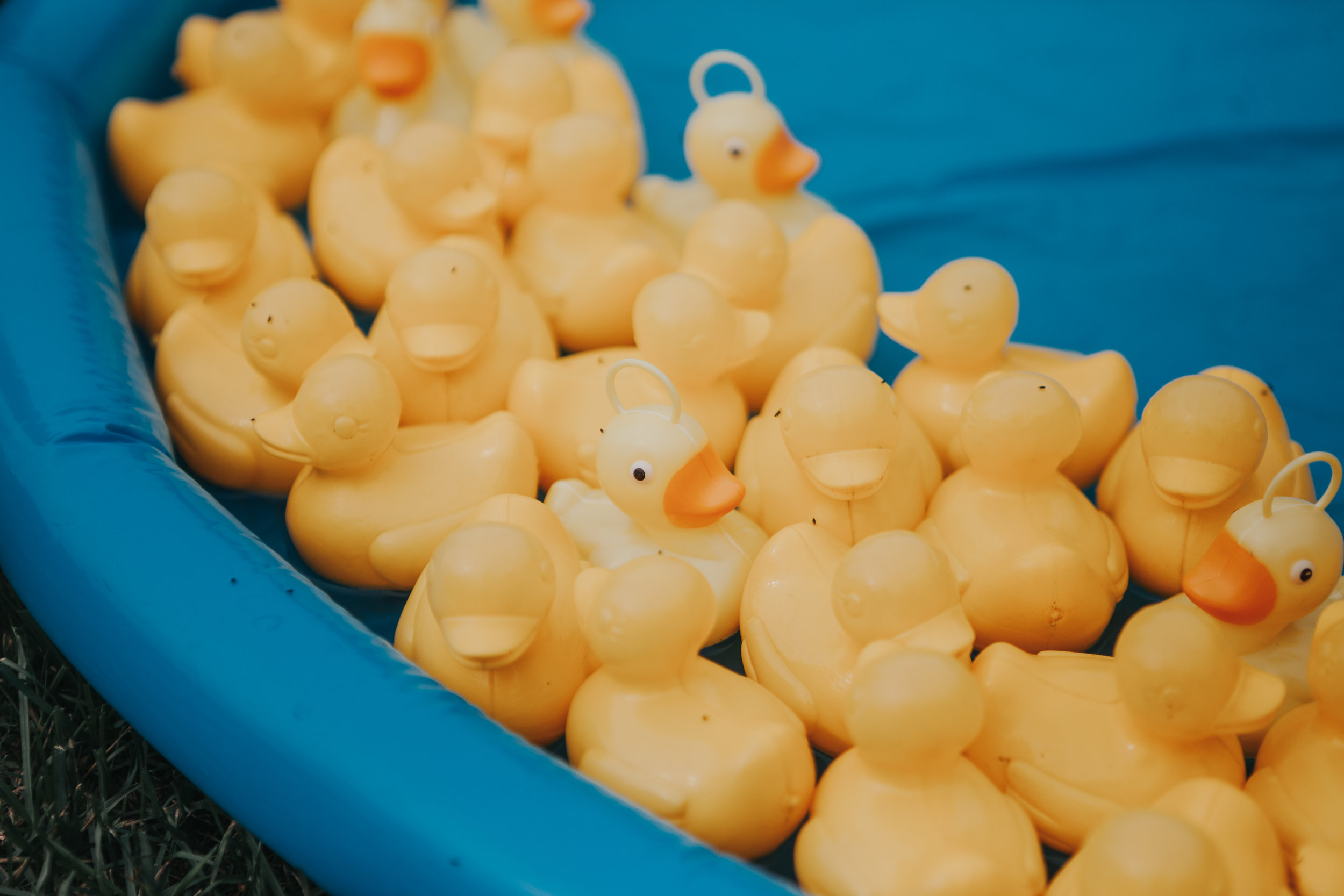 A close up of a load of yellow ducks in a blue paddling pool as part of a hook a duck, outdoor wedding game.