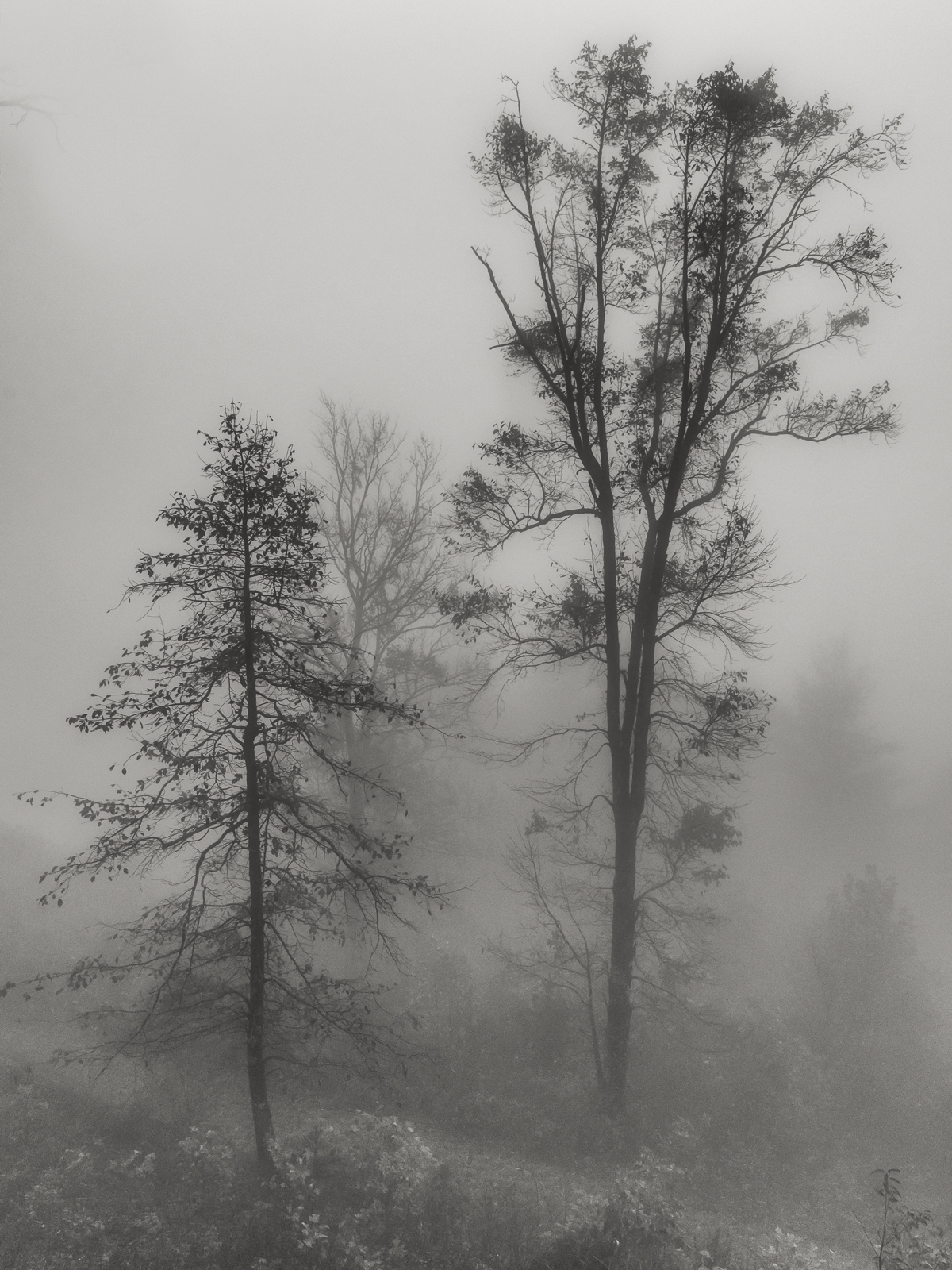 fog on ft mtn-1.JPG