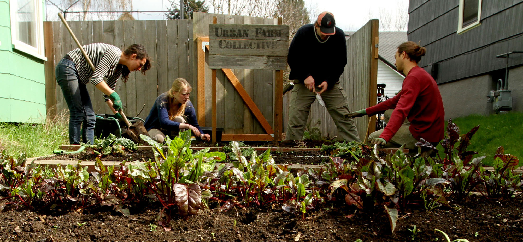 Urban Farm Collective