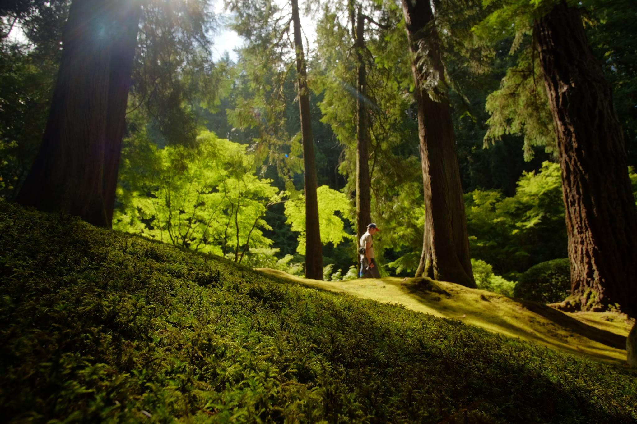 Japanese Garden moss, aka forest carpet