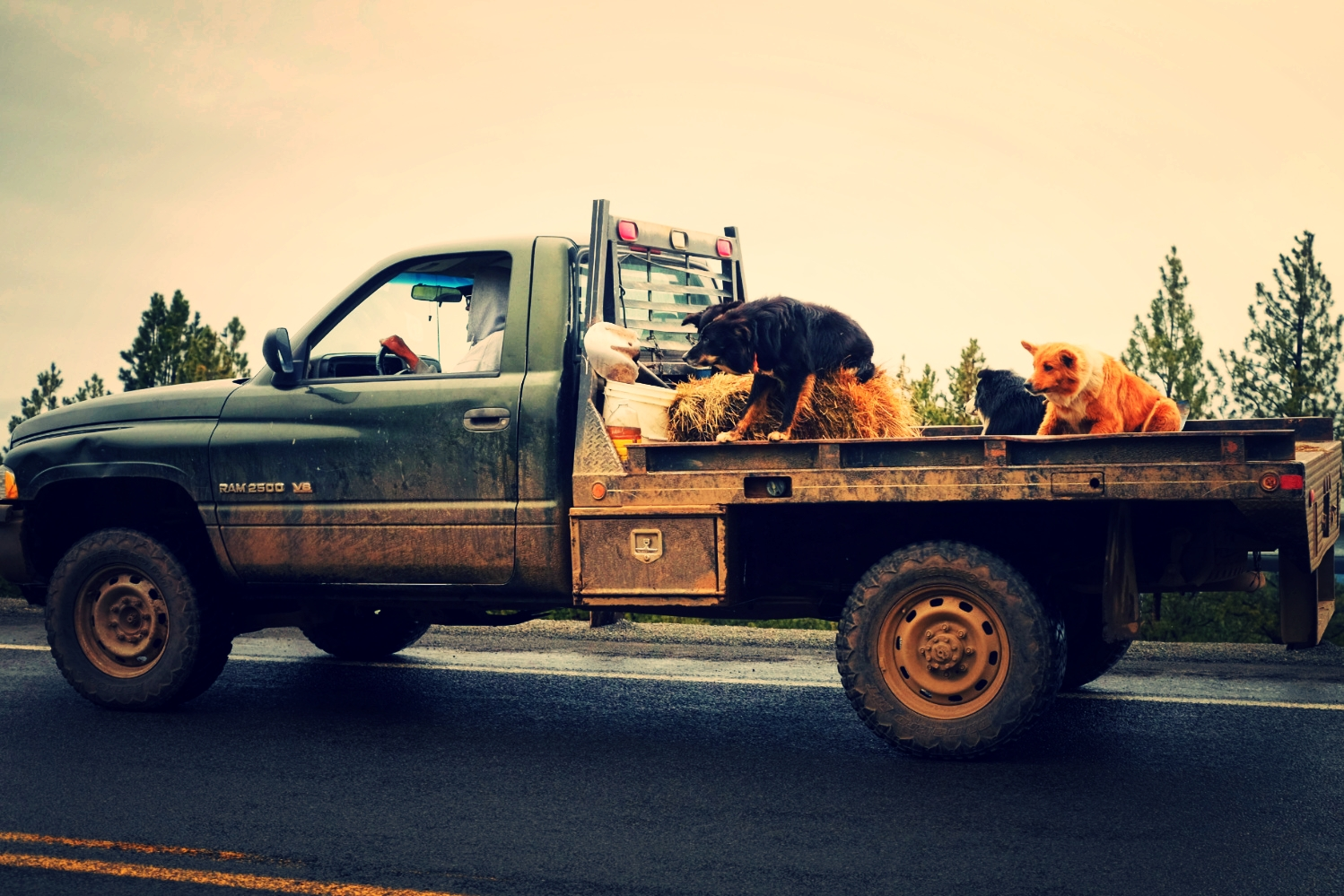 Standard protocol was seeing a truck full of barking dogs.