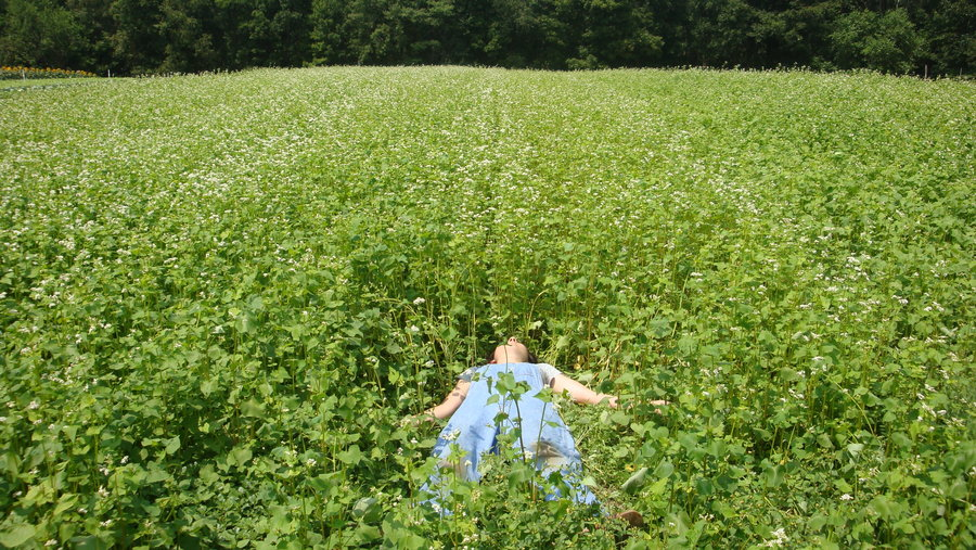 What not to do: You don't want the weeds to get away from you because they will dominate the site in only a few weeks if you don't push back in the initial establishing phase. Identifying weeds can be tricky in a meadow, because you can be pulling what you think is a weed, when it is actually a perennial flower or grass.  Weeds can be spread by birds, wind, squirrels--seeds get dropped or spread their feet or paws. A knowledgable gardener can tell you which plants are weeds to get you on the right track with it.