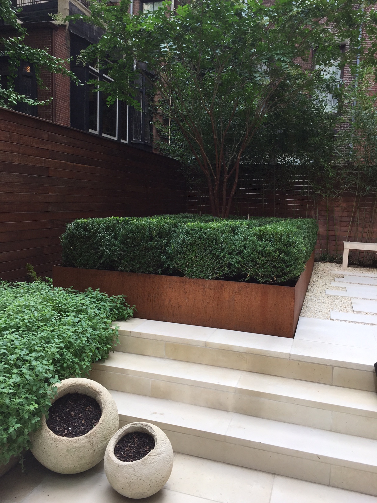 Here is boxwood used in a Corten-planter at a townhouse in Manhattan. The Client wanted low maintenance, green,and sculptural. Boxwood can be clipped to any form. Here I used the Korean type, and it is clipped to be slightly flat on top, almost like an object.