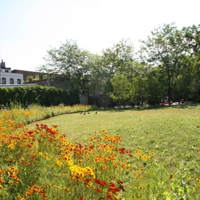 urban meadow     a vacant lot goes green