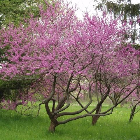 3 trees    worth loving
