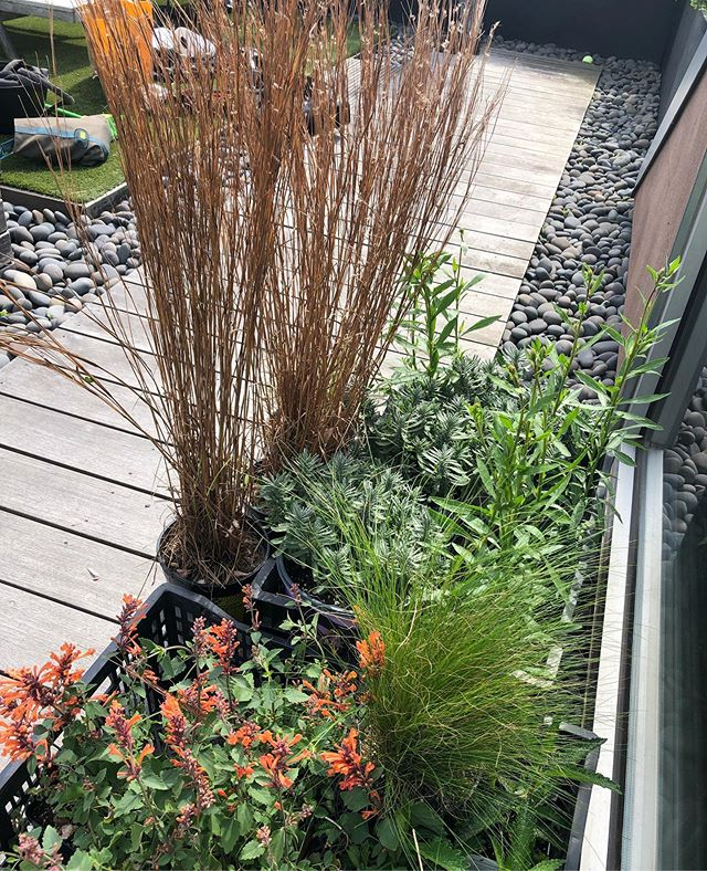 All my favorites going in to fill some holes— Little  Bluestem, Gaura, Verbena, Agastache, Nasella, and Lavender—all going in right before a well-timed spring shower.