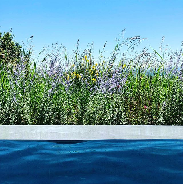Infinity edge pool against a field of flowering perennials and grasses with Tuscan hills beyond.