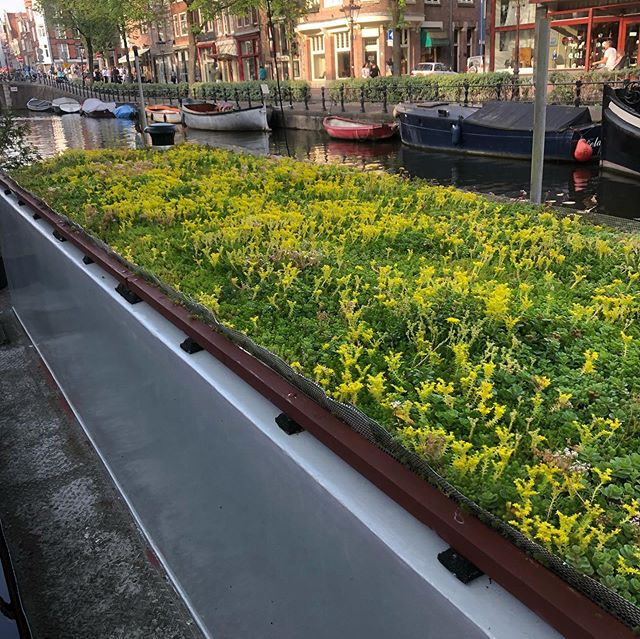 Nobody says you can't have a garden on a boat in Amsterdam. Nearly all of them have plantings in one way or another, and each one with its own unique charm 💚😍